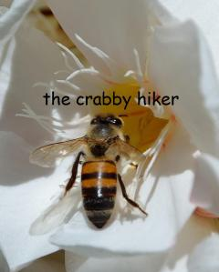 Not the actual creature encountered, but the only bee picture we own.