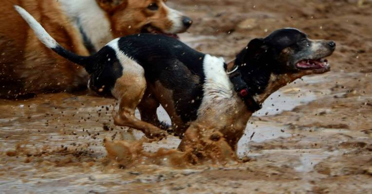 DASH! enjoying a good romp through the mud.  DASH! is the only dog I've ever 'mothered' that I would clone in a heartbeat.   The world needs many more DASH!'s .
